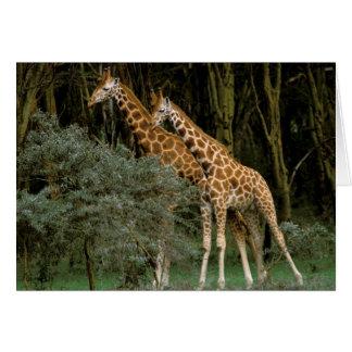 Africa, Kenya, Masai Mara. Masai giraffe Card