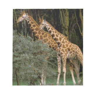 Africa, Kenya, Masai Mara. Masai giraffe Notepad