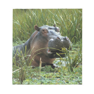 Africa, Kenya, Masai Mara NR. A mother hippo and Notepad