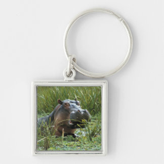 Africa, Kenya, Masai Mara NR. A mother hippo and Silver-Colored Square Key Ring