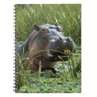 Africa, Kenya, Masai Mara NR. A mother hippo and Spiral Notebook