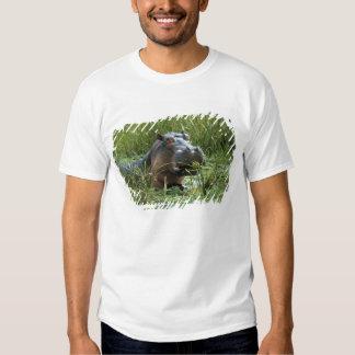 Africa, Kenya, Masai Mara NR. A mother hippo and Tshirt