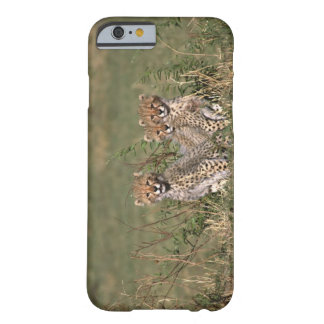 Africa; Kenya; Masai Mara; Three cheetah cubs Barely There iPhone 6 Case