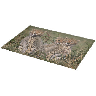 Africa; Kenya; Masai Mara; Three cheetah cubs Cutting Board