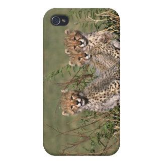 Africa; Kenya; Masai Mara; Three cheetah cubs iPhone 4 Cover