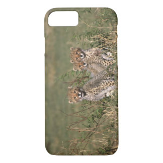 Africa; Kenya; Masai Mara; Three cheetah cubs iPhone 8/7 Case