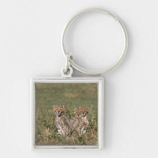 Africa; Kenya; Masai Mara; Three cheetah cubs Key Ring