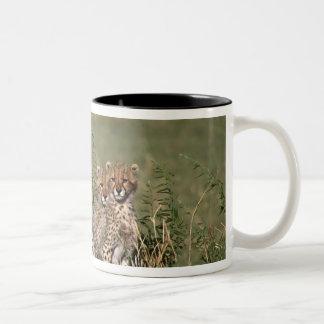 Africa; Kenya; Masai Mara; Three cheetah cubs Mugs