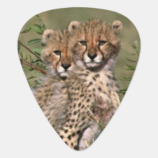 Africa; Kenya; Masai Mara; Three cheetah cubs Plectrum