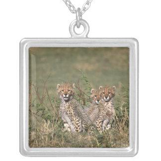 Africa; Kenya; Masai Mara; Three cheetah cubs Silver Plated Necklace