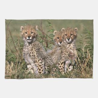 Africa; Kenya; Masai Mara; Three cheetah cubs Tea Towel