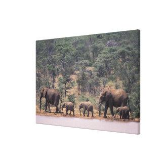 Africa, Kenya, Nanyuki, Mpala. African Stretched Canvas Prints