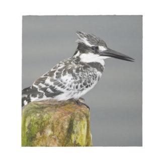 Africa. Kenya. Pied Kingfisher at Lake Naivasha. Notepad