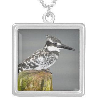 Africa. Kenya. Pied Kingfisher at Lake Naivasha. Silver Plated Necklace