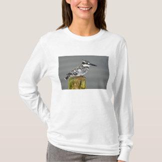 Africa. Kenya. Pied Kingfisher at Lake Naivasha. T-Shirt