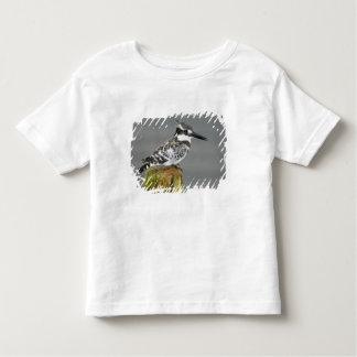 Africa. Kenya. Pied Kingfisher at Lake Naivasha. T Shirt