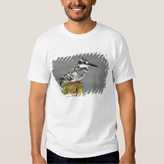 Africa. Kenya. Pied Kingfisher at Lake Naivasha. Tee Shirt