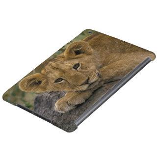 Africa, Kenya. Portrait of a lion.