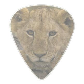 Africa, Kenya. Portrait of a lion. Acetal Guitar Pick
