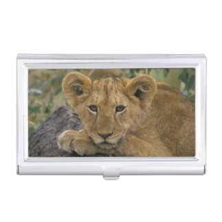 Africa, Kenya. Portrait of a lion. Business Card Holder