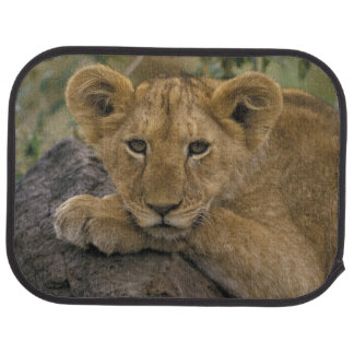 Africa, Kenya. Portrait of a lion. Car Mat