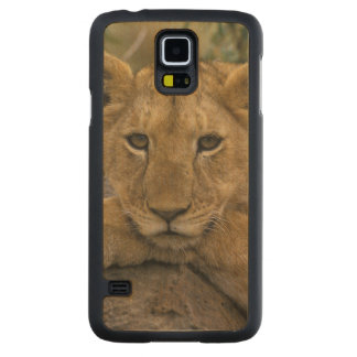 Africa, Kenya. Portrait of a lion. Carved Maple Galaxy S5 Case