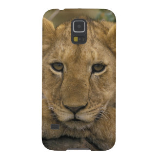 Africa, Kenya. Portrait of a lion. Galaxy S5 Cover