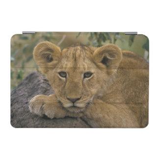Africa, Kenya. Portrait of a lion. iPad Mini Cover
