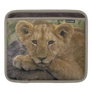 Africa, Kenya. Portrait of a lion. Sleeve For iPads
