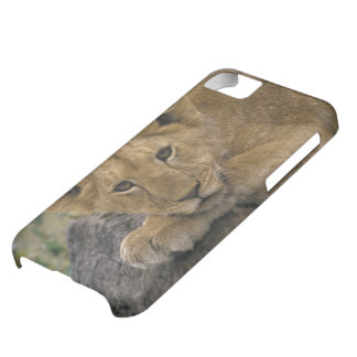 Africa, Kenya. Portrait of a lion. iPhone 5C Case