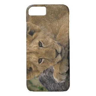 Africa, Kenya. Portrait of a lion. iPhone 8/7 Case