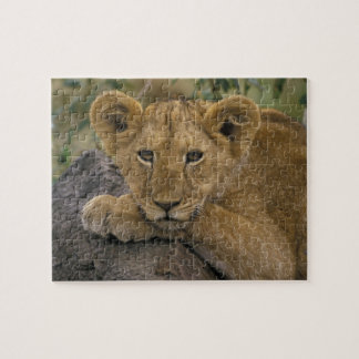 Africa, Kenya. Portrait of a lion. Jigsaw Puzzle