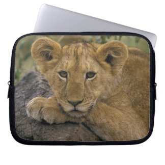Africa, Kenya. Portrait of a lion. Laptop Sleeve