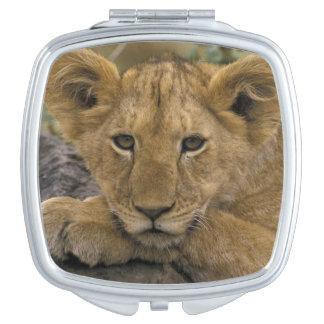 Africa, Kenya. Portrait of a lion. Makeup Mirrors