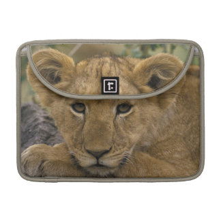 Africa, Kenya. Portrait of a lion. Sleeve For MacBook Pro