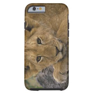 Africa, Kenya. Portrait of a lion. Tough iPhone 6 Case