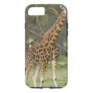 Africa. Kenya. Rothschild's Giraffe at Lake 2 iPhone 8/7 Case