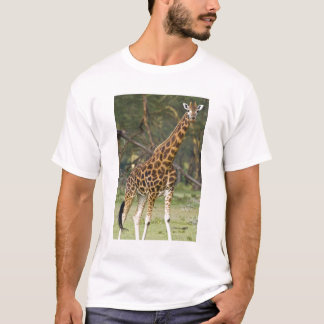 Africa. Kenya. Rothschild's Giraffe at Lake 2 T-Shirt