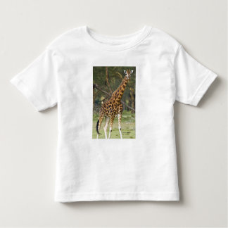 Africa. Kenya. Rothschild's Giraffe at Lake 2 Toddler T-Shirt