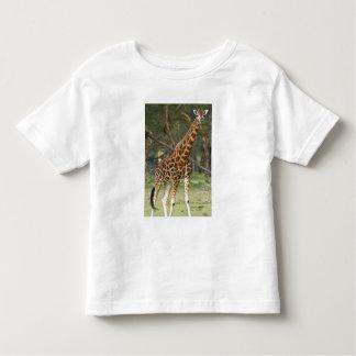 Africa. Kenya. Rothschild's Giraffe at Lake 2 Tshirt
