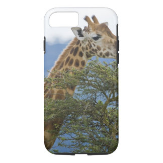 Africa. Kenya. Rothschild's Giraffe at Lake iPhone 8/7 Case