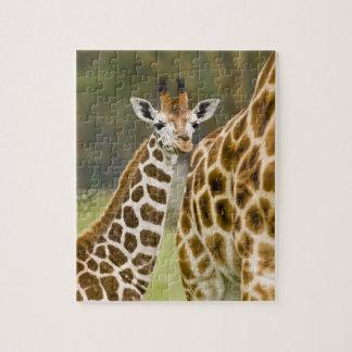 Africa. Kenya. Rothschild's Giraffe baby with 2 Jigsaw Puzzle