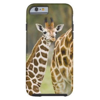 Africa. Kenya. Rothschild's Giraffe baby with 2 Tough iPhone 6 Case