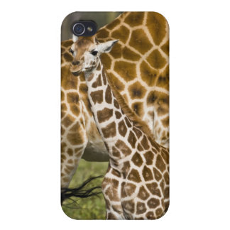 Africa. Kenya. Rothschild's Giraffe baby with Cover For iPhone 4