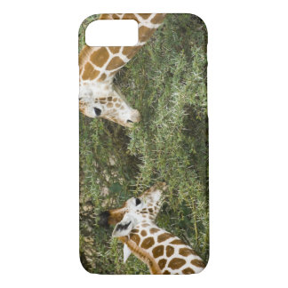 Africa. Kenya. Rothschild's Giraffes at Lake iPhone 8/7 Case