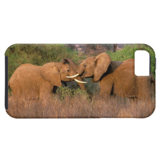 Africa, Kenya, Samburu. Elephant challenge iPhone 5 Covers