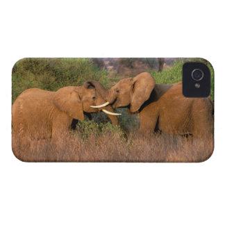 Africa, Kenya, Samburu. Elephant challenge iPhone 4 Cover