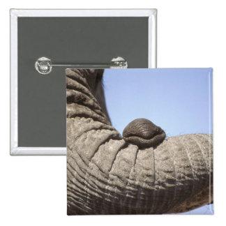Africa, Kenya, Samburu. Elephant trunk 15 Cm Square Badge