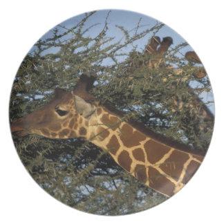 Africa, Kenya, Samburu National Reserve, 2 Plate