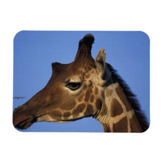 Africa, Kenya, Samburu National Reserve, Rectangular Photo Magnet